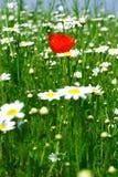 wiosna łąkowa Zdjęcie Royalty Free