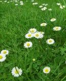 wiosna łąkowa Fotografia Royalty Free