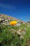 wiosna łąkowa Fotografia Stock