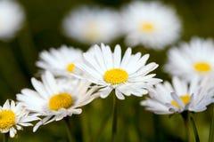 wiosna łąkowa Obraz Stock