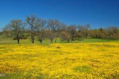 wiosna łąkowa Obrazy Royalty Free