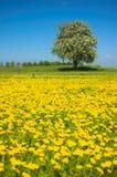 wiosna łąkowa obraz royalty free