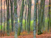 Wiosna świezi krzaki i drzewni bagażniki fotografia royalty free