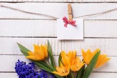 Wiosna żółci tulipany, błękitni hiacyntów kwiaty i opróżniają etykietkę dalej Zdjęcie Royalty Free