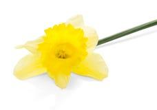 Wiosna żółty kwiat obrazy royalty free