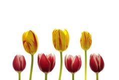 wiosna Obrazy Stock