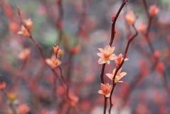 Wiosna Obraz Stock