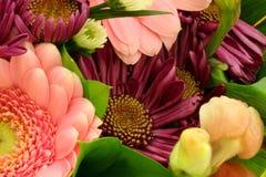 wiosna Zdjęcie Royalty Free
