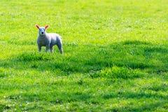 Wiosna! Zdjęcia Stock