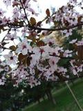 Wiosna obrazy royalty free