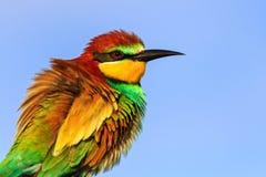 Wiosna barwiony ptak z pięknym upierzeniem Zdjęcia Stock