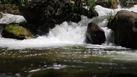Wiosna Biegająca Daleko Przez mech Zakrywającej skały zdjęcie wideo