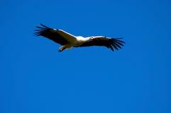 wiosna bociana symbol Zdjęcie Stock
