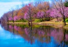 Wiosna Brzeg rzeki Obrazy Royalty Free