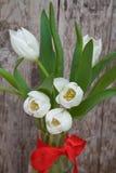 Wiosna bukiet biali tulipany z zielenią opuszcza nad białym starym tłem Zdjęcie Stock
