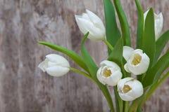 Wiosna bukiet biali tulipany z zielenią opuszcza nad białym starym tłem Fotografia Stock