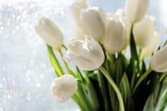 Wiosna bukiet biali tulipany z zielenią opuszcza nad bokeh tłem Selekcyjna ostrość Obrazy Stock