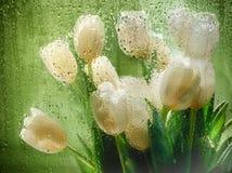 Wiosna bukiet biali tulipany z zielenią opuszcza przez kropel woda Ostrość na kroplach woda Zdjęcie Stock