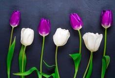 Wiosna bukiet pozafioletowi tulipany przeciw ciemnemu tłu, przestrzeń dla teksta, świąteczny tło obraz royalty free
