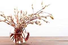 Wiosna bukiet: wierzba rozgałęzia się z puszystymi cynaderkami w transpa Zdjęcia Royalty Free