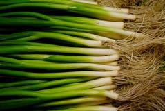 wiosna cebuli Fotografia Royalty Free