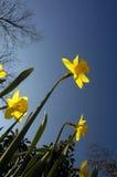 wiosna chwały fotografia royalty free