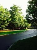 Wiosna czas… wzrastał liście, naturalny tło Zdjęcie Stock