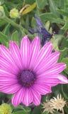 Wiosna czas… wzrastał liście, naturalny tło Zdjęcia Stock