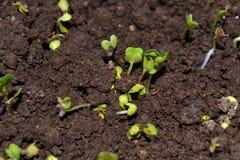 Wiosna czas… wzrastał liście, naturalny tło Fotografia Royalty Free