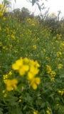 Wiosna czas… wzrastał liście, naturalny tło Obrazy Royalty Free
