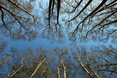 Wiosna czas dla Istanbuł Kwiecień 2019, Drzewny kwitnienie Błękitny i Jaskrawy niebo widok fotografia stock