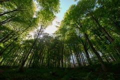Wiosna czas Dla Turcja, Kwiecie? 2019, Belgrad las, Jaskrawy dzie? obraz royalty free