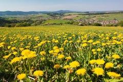 Wiosna czas i łąka z pospolitym dandelion Zdjęcie Stock