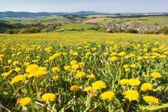 Wiosna czas i łąka z pospolitym dandelion fotografia stock