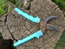 Wiosna czas i ogrodowi narzędzia na drewnianym retro wierzchołku Starzy narzędzia na drewnianym tle, ogrodowy pruner Zdjęcie Royalty Free