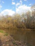 Wiosna czas przy rzeką obraz royalty free
