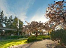 Wiosna czas w Bonsor parku Obraz Stock