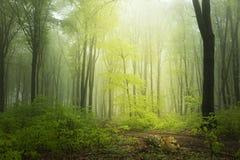 Wiosna czas w fogy lesie Obrazy Royalty Free