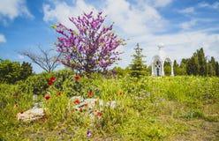Wiosna czas w parku Fotografia Royalty Free