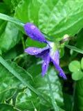 Wiosna czasu kwiat po deszczu fotografia royalty free