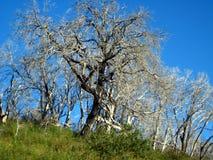 wiosna czekanie Zdjęcie Royalty Free