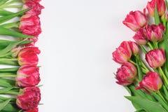 Wiosna czerwoni i różowi tulipany na białym tle Szeroka panoramiczna kwiecista granica obraz royalty free