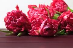 Wiosna czerwoni i różowi tulipany na białym tle Szeroka panoramiczna kwiecista granica fotografia royalty free