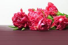 Wiosna czerwoni i r obrazy stock