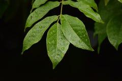 Wiosna deszcz na greenery Obrazy Stock
