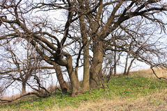 wiosna drewno Obrazy Royalty Free