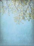 Wiosna Drzewa Tło Fotografia Stock