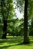 Wiosna drzewo Fotografia Royalty Free