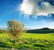 wiosna drzewo zdjęcie royalty free