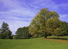 wiosna drzewo Fotografia Stock